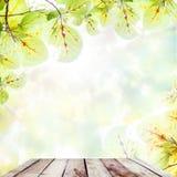 Деревянный пол на красивом зеленом цвете выходит на ветви в autu Стоковые Изображения