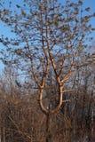 Деревянный подсвечник Стоковое Фото