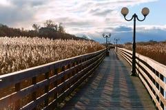 Деревянный променад через тростники в солнечном свете, деревянной прогулке планки с фонарными столбами стоковое изображение