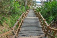 Деревянный путь в лесе стоковое изображение