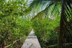 Деревянный путь в джунглях Стоковое фото RF