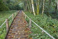 Деревянный путь в природном парке Muniellos леса astrological стоковые фото