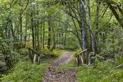 Деревянный путь в природном парке Muniellos леса astrological стоковые изображения rf