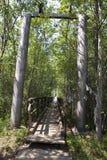 Деревянный путь в пуще Стоковые Фотографии RF