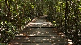 Деревянный путь в пуще стоковое изображение