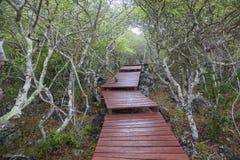 Деревянный путь Галапагос стоковое изображение rf