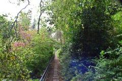 Деревянный путь загородки в лесе стоковое изображение