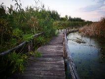 Деревянный путь над болотом на заходе солнца стоковая фотография rf