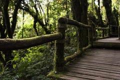 Деревянный путь планки в лесе стоковые фотографии rf