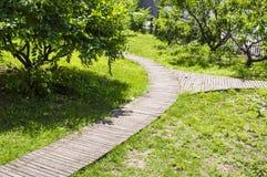 Деревянный путь развилки Стоковое Фото