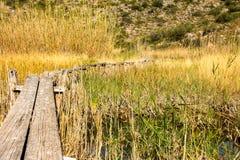 Деревянный путь через тростники стоковая фотография