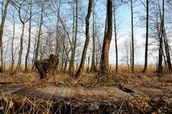 Деревянный путь через трясину весны Стоковые Фото