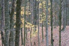 Деревянный румынский лес осени на дождливый день стоковые изображения rf