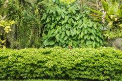 Деревянный сад украшать и завода стоковые фотографии rf