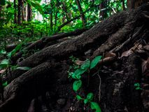 Деревянный самый лучший взгляд Стоковое Изображение RF