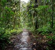 Деревянный след в дождевом лесе Амазонки Колумбии стоковые изображения rf