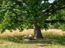 Деревянный стенд в тени большого дерева с зеленым цветом выходит в лето на сельскую местность стоковое фото
