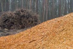 Деревянный стог sawdast в лесе стоковое изображение rf