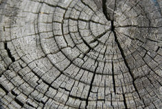 Деревянный столб Стоковая Фотография