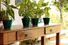 Деревянный стол с ящиками и баками завода на верхней части стоковые фотографии rf
