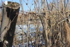 Деревянный столб с колючей проволокой стоковое изображение rf