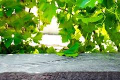 Деревянный стол с виноградником Стоковое Изображение RF