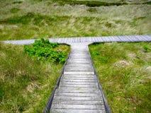 Деревянный след водя в 2 направлениях Стоковая Фотография