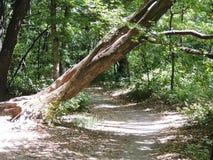 Деревянный след стоковая фотография