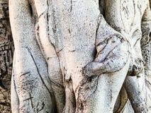 Деревянный, текстура природы абстрактный серый цвет предпосылки Конец-вверх Стоковое фото RF