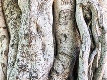 Деревянный, текстура природы абстрактный серый цвет предпосылки Конец-вверх Стоковые Фото
