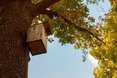 Деревянный фидер птицы в парке среди деревьев с желтым листопадом Осень Стоковые Изображения RF