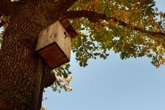 Деревянный фидер птицы в парке среди деревьев с желтым листопадом Осень Стоковое Изображение RF