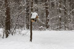 Деревянный фидер птиц на ветви дерева стоковые изображения