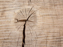 Деревянный хобот стоковое изображение