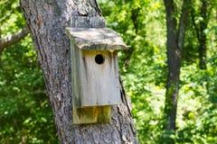 Деревянный Birdhouse в лесе стоковое фото rf