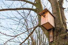 Деревянный birdhouse на дереве Стоковое Фото