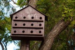 Деревянный birdhouse с много отверстий на дереве Стоковое Фото