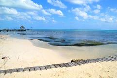 Деревянный Cay янтаря взгляда дорожки в Белизе Стоковые Изображения RF
