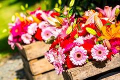 2 деревянных коробки цветка содержа gerberas Стоковое Фото