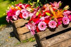 2 деревянных коробки цветка содержа gerberas Стоковая Фотография