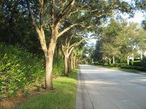 Дерев-выровнянная улица Стоковая Фотография RF