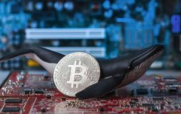 Держатель кита Bitcoin на концепции интегральной схемаы стоковые фото