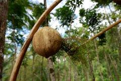 держатель лампы ремесла от материала раковины кокоса стоковые фотографии rf