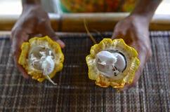 Держать открытый стручок какао стоковые изображения