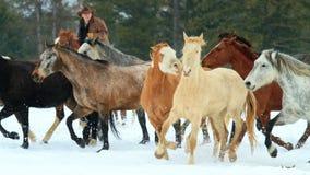 Держать лошадей в линии стоковая фотография rf