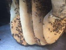 Держать пчелы, положения пчелы стоковые фото