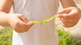 Держать рук ребенка раскрывает свеже выбранный стручок гороха Стоковое Фото