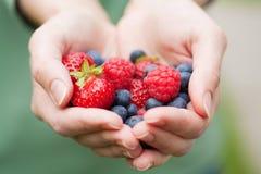 держать рук ягод свежий стоковые фото