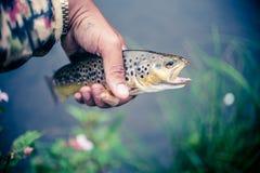 Держать рыбную ловлю уловленную форелью стоковое изображение
