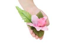 Держать цветок стоковая фотография rf